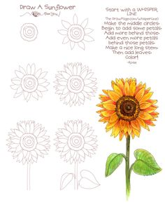 Triipy clipart sunflower Png Girasol Tattoo Drawing Tumblr