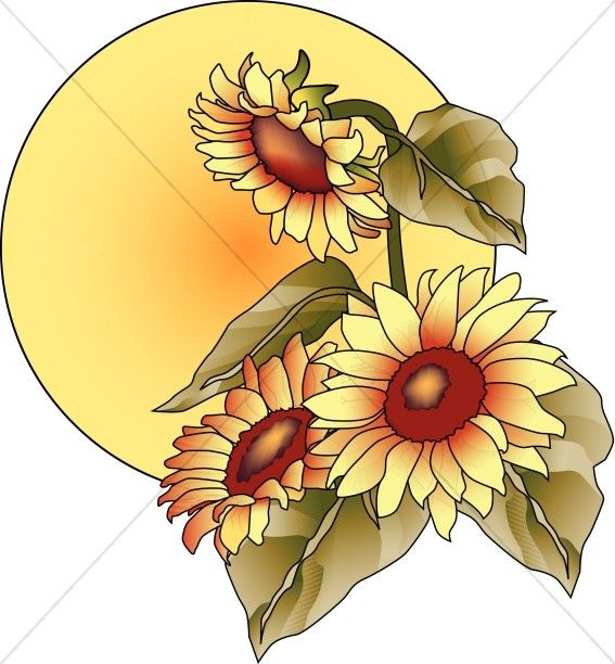 Triipy clipart sunflower Best Clipart about Sun 718