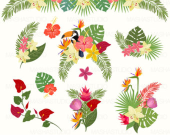 Tropical clipart Clipart with exotic clipart: Tropical