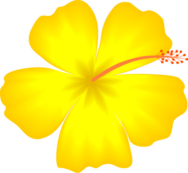 Yellow Flower clipart hibiscus flower Images clipart Hibiscus Borders flower