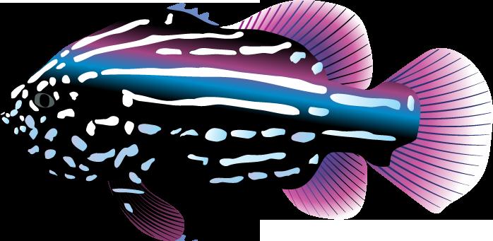 Tropical Fish clipart Download Art Fish Fish of