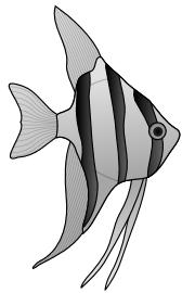 Angelfish clipart black and white Public 2 Art Clipart Aquarium