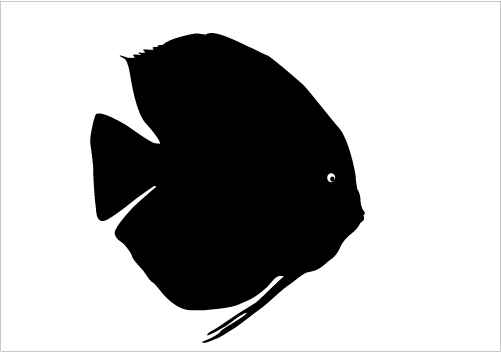 Shadow clipart fish #8