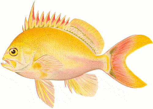Clip Clipart of Free Fish