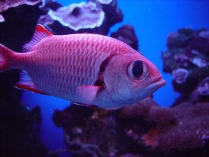Tropical Fish clipart pink fish #15