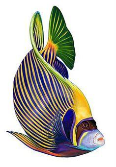 Angelfish clipart beautiful fish Fish Tropical and Tropical