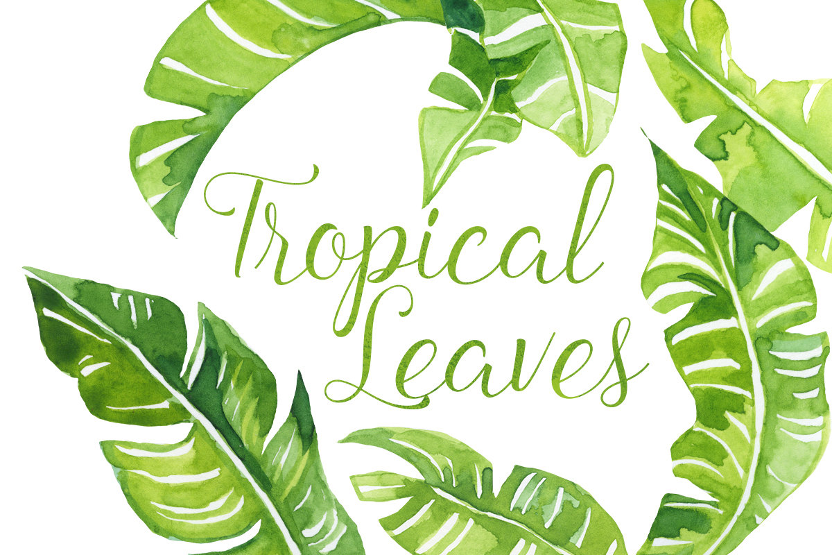 Leaves clipart tropical leaf #2