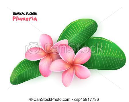Tropics clipart bloom #2