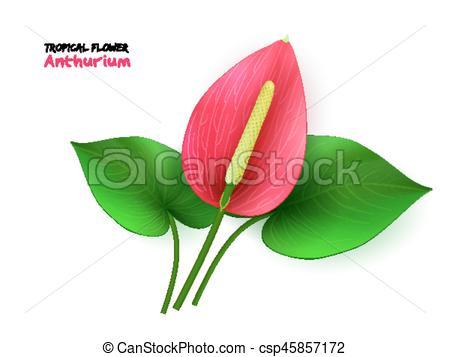 Tropics clipart bloom #5
