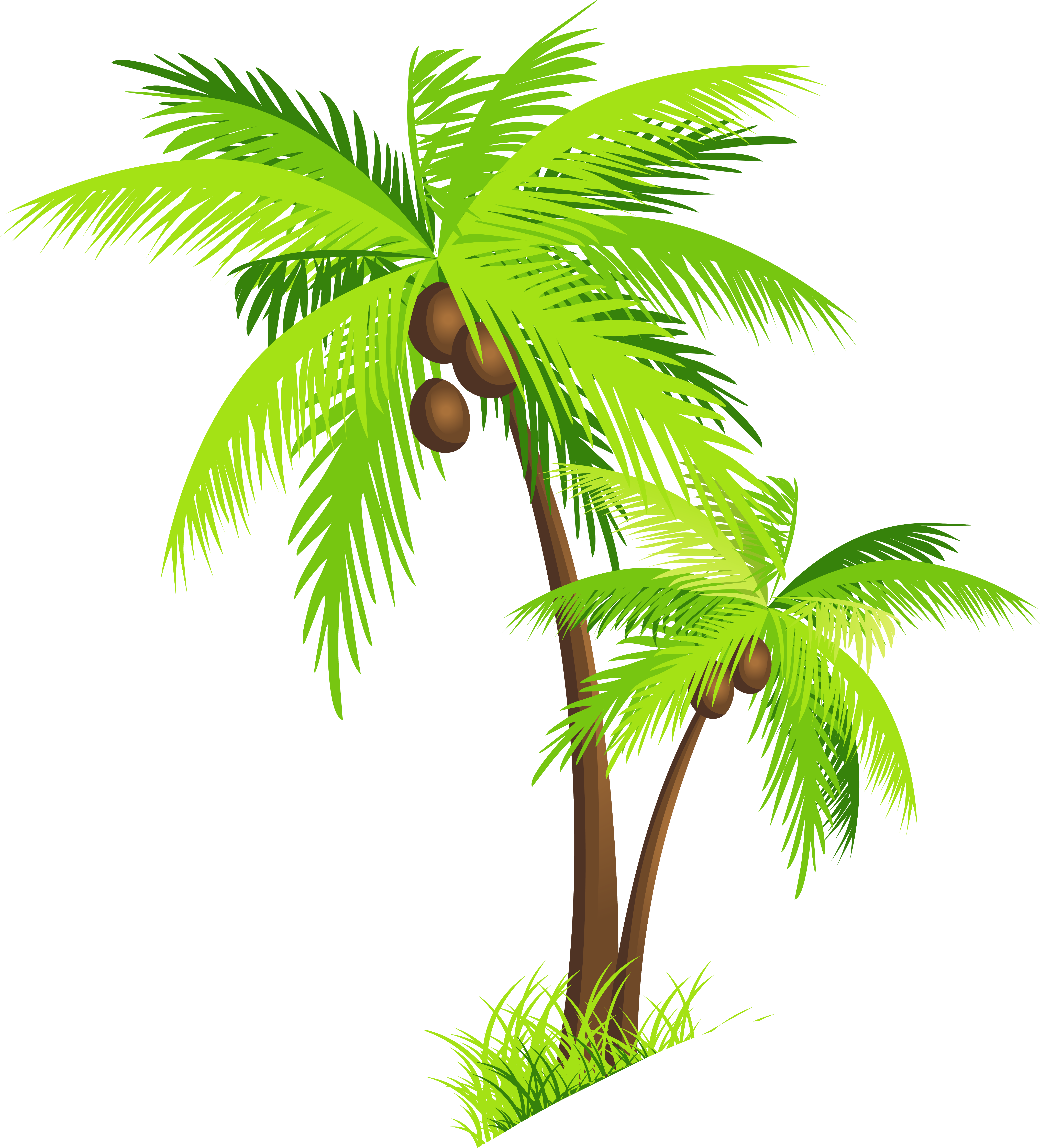 Palm Tree clipart real Tropical Collection palm Clip
