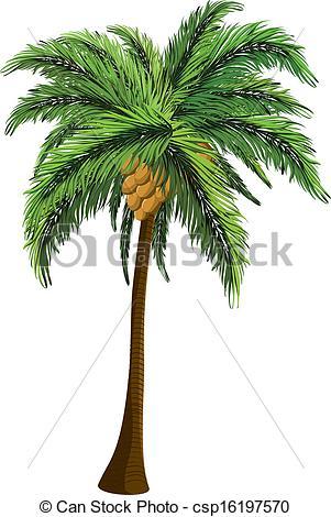 Palm Tree clipart coconut tree Coconut Illustration csp16197570 coconut