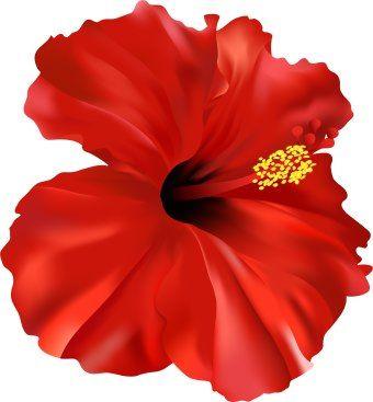 Red Flower clipart hawaiian #8