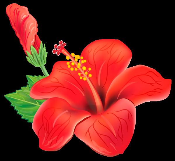 Tropics clipart hibiscus flower #13