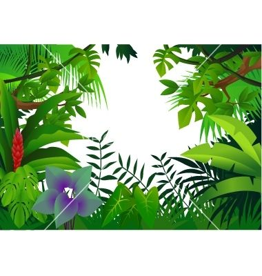 Drawn rainforest plumeria tree FOREST Pinterest Rainforest rain Tropical