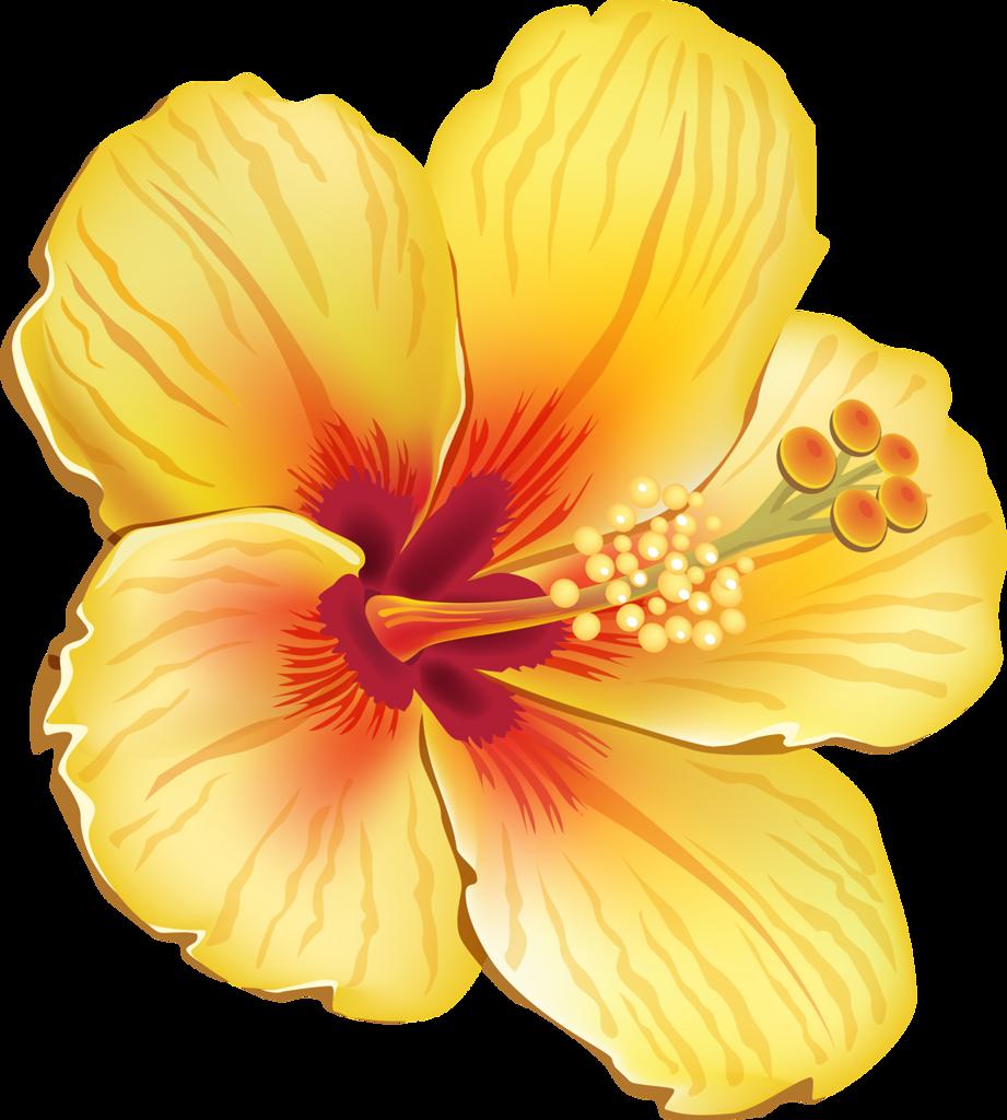 Yellow Flower clipart tropical flower Art❤Tropical Pinterest ✾ tropical art