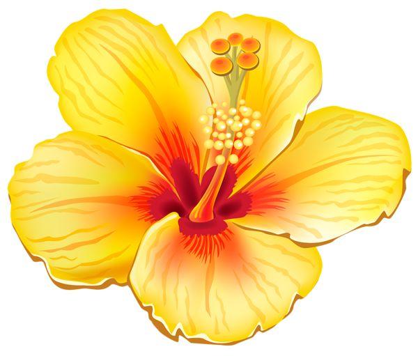 Yellow Flower clipart hibiscus flower Pinterest Best 25+ Exotic Flower