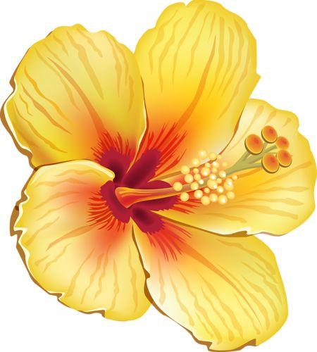 Tropics clipart yellow hibiscus #9