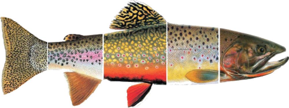 Trout clipart river fish #5