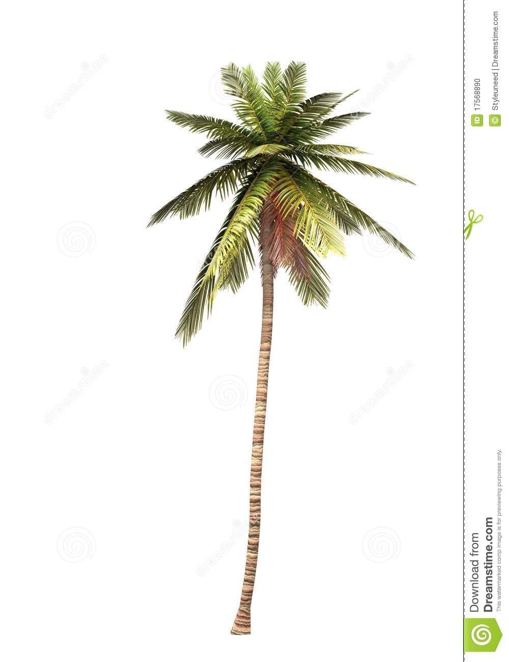 Trunk clipart coconut tree #10