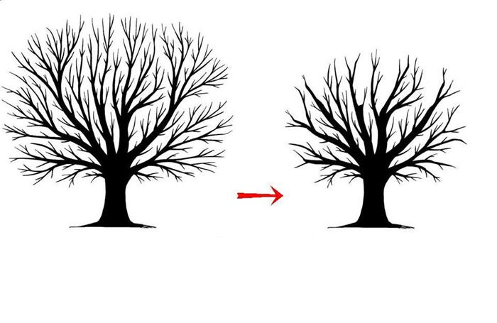 Trunk clipart tree removal #13