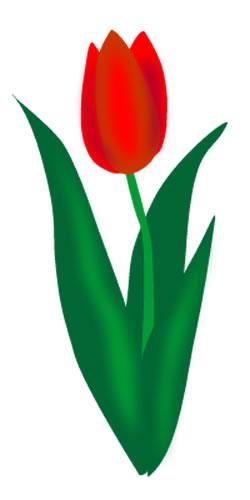 Tulip clipart Free Tulip Art Tulip Pictures