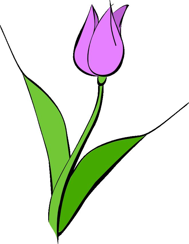 Tulip clipart Free Pictures Tulip Art images