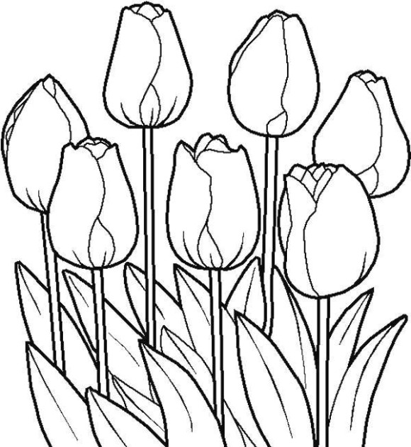 Tulip clipart colouring page #12