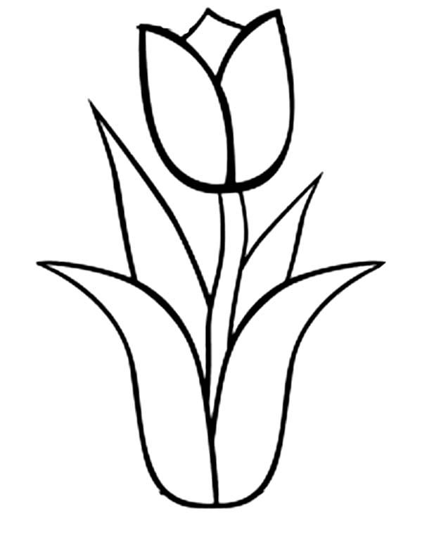 Tulip clipart colouring page #4