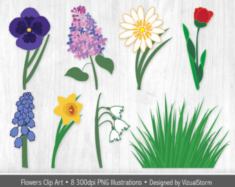 Tulip clipart daffodil flower #5