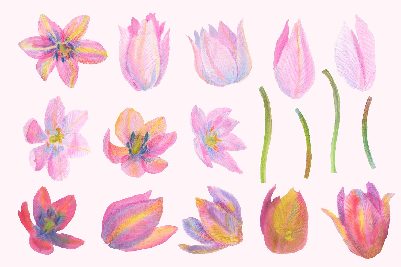 Tulip clipart pastel #10