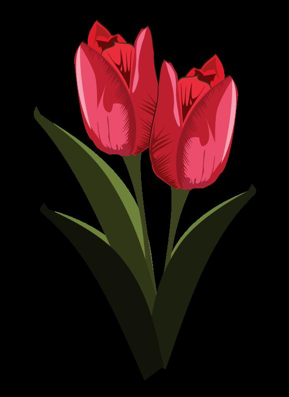 Tulip clipart pretty flower #2