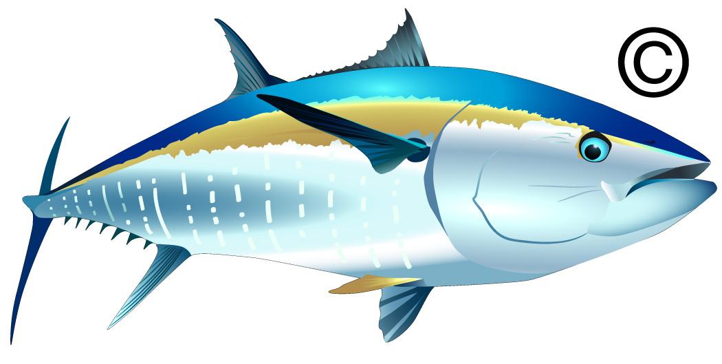 Tuna clipart Clipart Clipart Tuna tuna%20fish%20clip%20art Clip