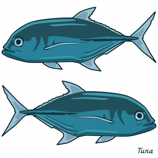 Tuna clipart Stock Domain Tuna  Art