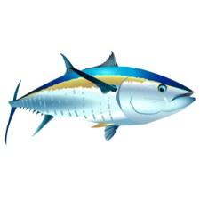 Tuna clipart angry #4