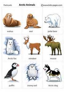 Tundra clipart arctic animal #7