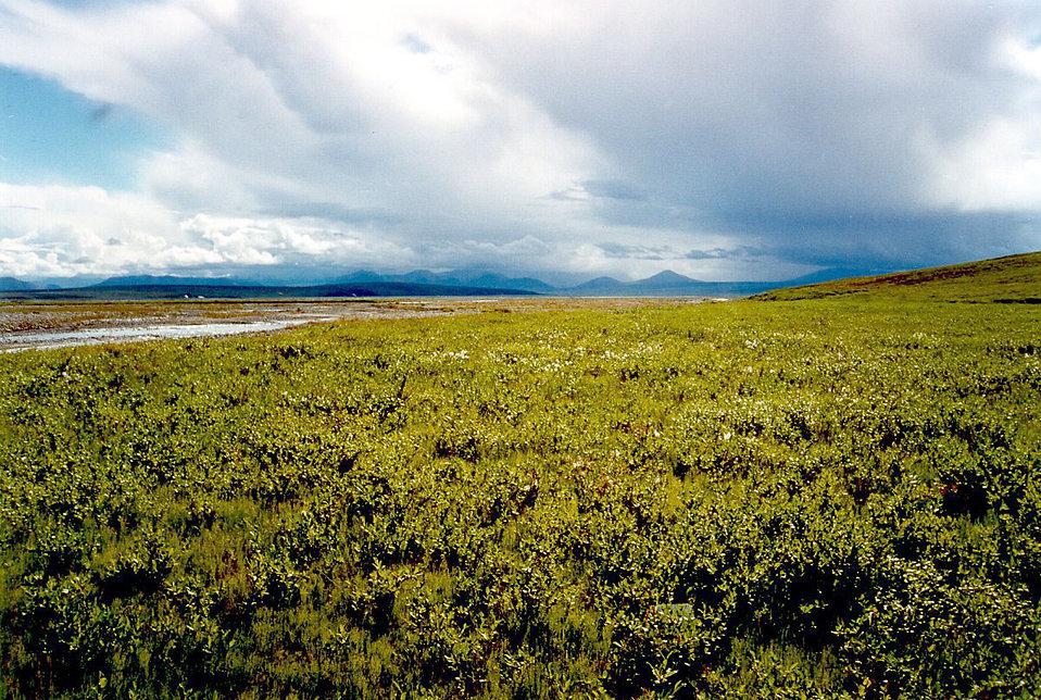 Tundra clipart arctic landscape #7