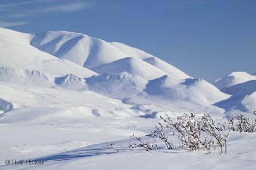 Tundra clipart arctic landscape #8