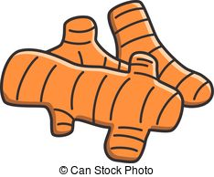 Ginger clipart turmeric  root  Clipart Vector