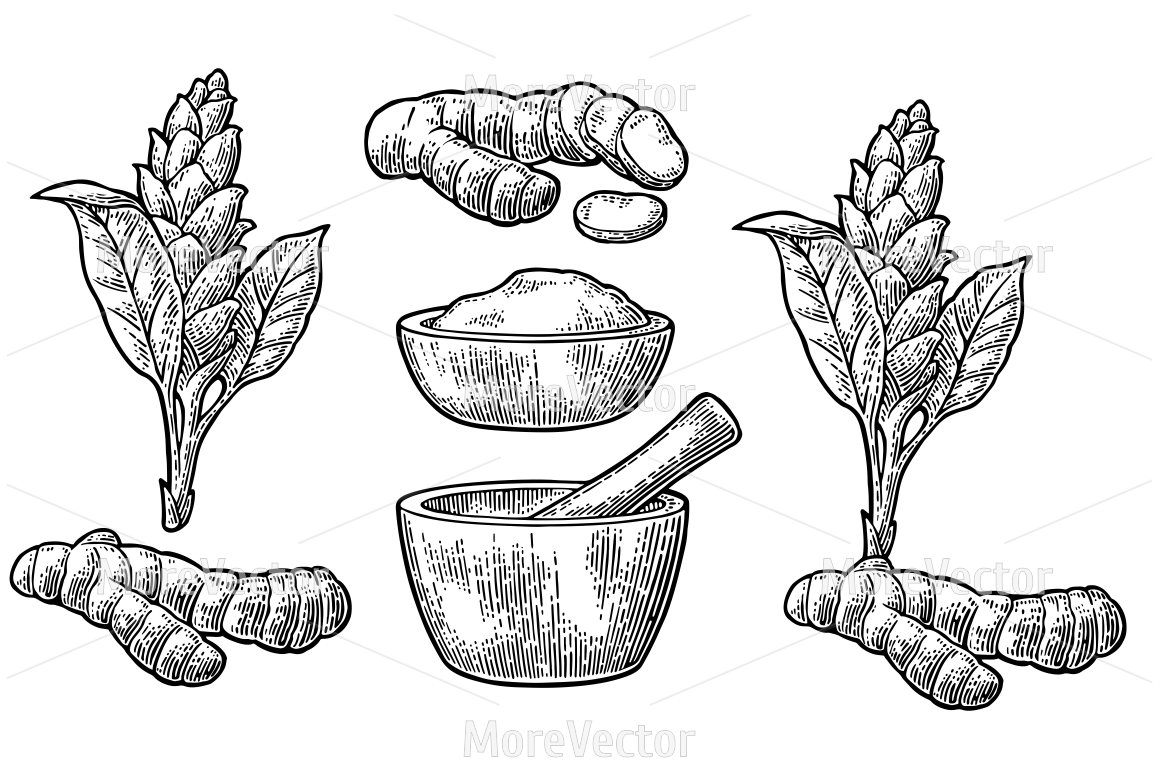 Turmeric clipart black and white With mortar pestle TheHungryJPEG powder