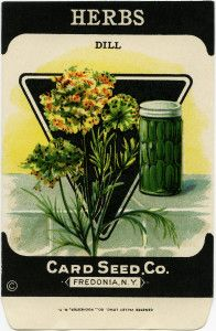 Turmeric clipart dill pickle 73 garden dill image old
