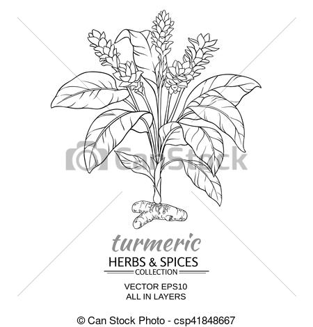 Turmeric clipart herbs and spice Plant Vector Clip  Vector