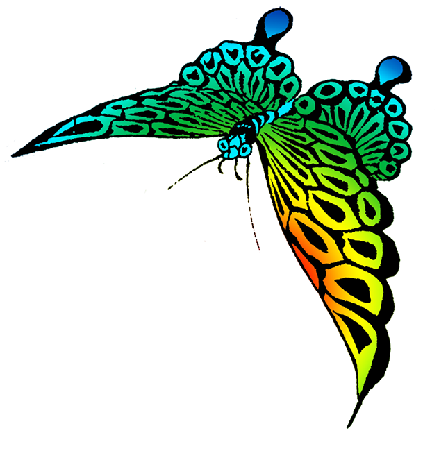 Turquoise clipart beautiful butterfly #11