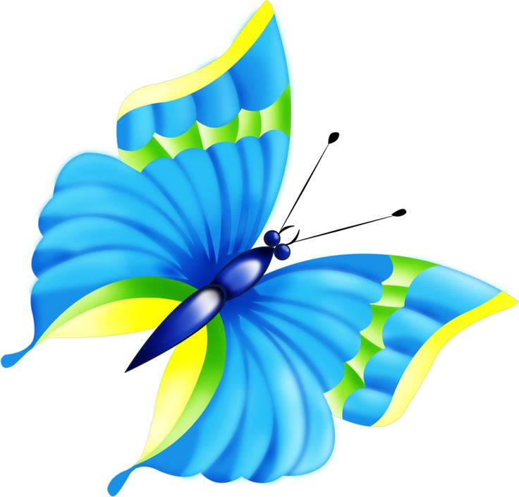 Turquoise clipart beautiful butterfly #10