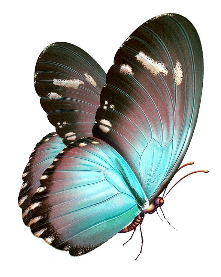Turquoise clipart beautiful butterfly #13