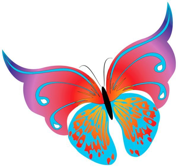 Turquoise clipart beautiful butterfly #8