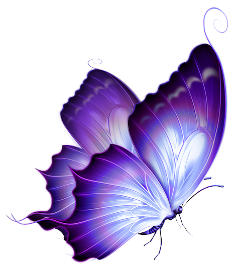Turquoise clipart purple butterfly #4