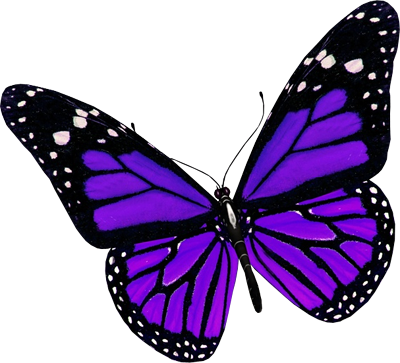 Turquoise clipart purple butterfly #6