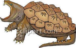 Turtle clipart angry #7
