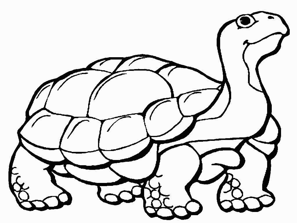 Tortoise clipart coloring page #5