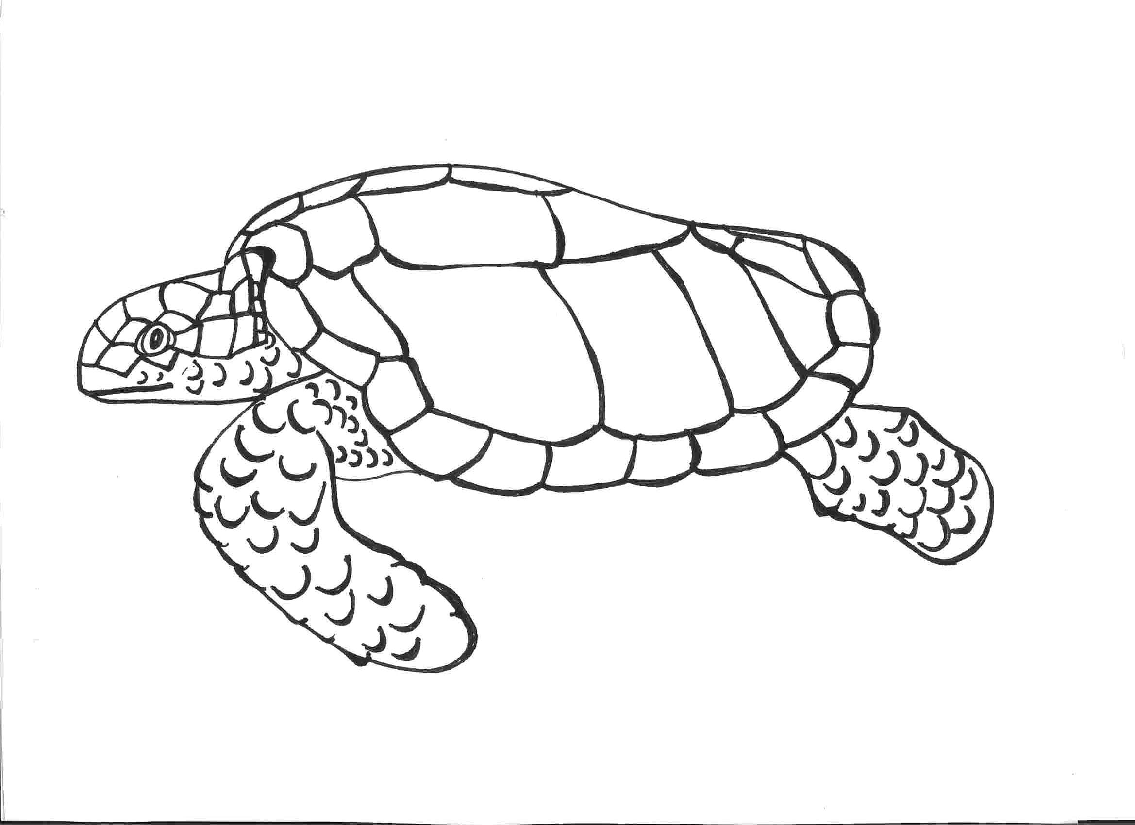Drawn sea turtle line drawing Printable Coloring Pages Coloring Kids